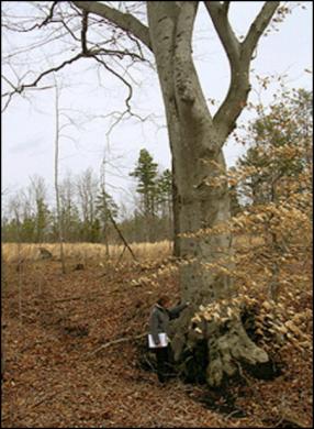AB_tree