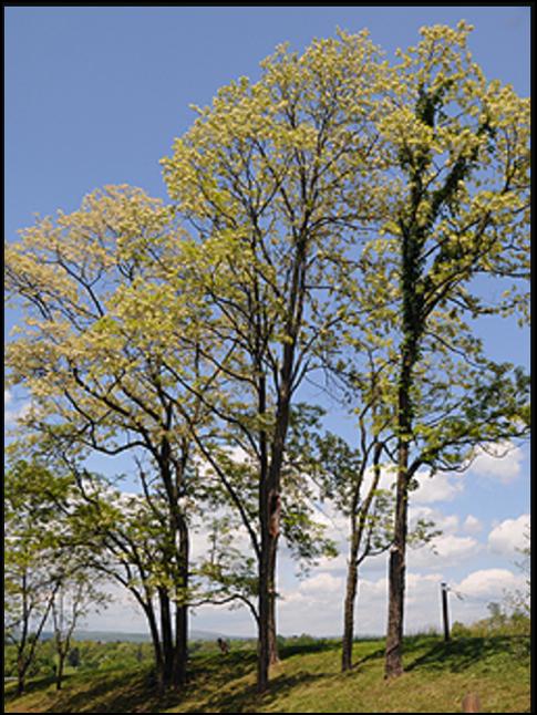 BL_tree