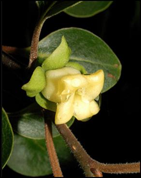 CP_flower