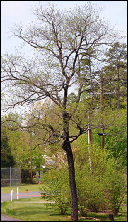 CP_tree