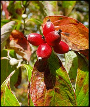 FD_berry