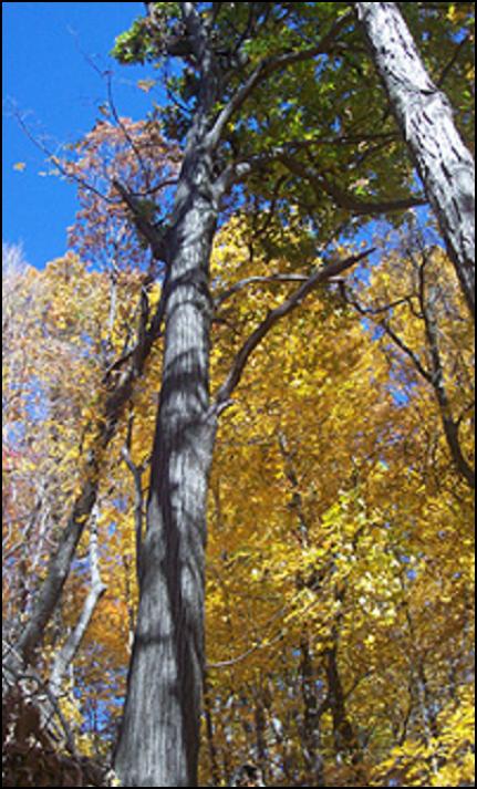 NRO_tree