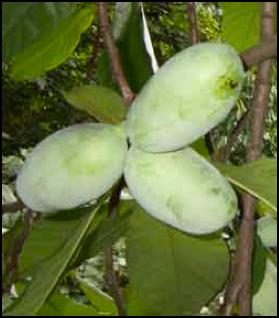 PP_fruit