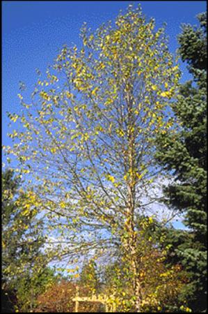 RB_tree