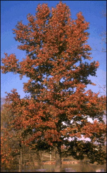 SW_tree